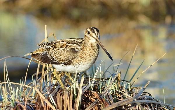 Водоплавающие-птицы-Описание-названия-и-особенности-водоплавающих-птиц-134