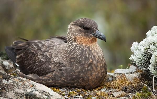 Водоплавающие-птицы-Описание-названия-и-особенности-водоплавающих-птиц-136