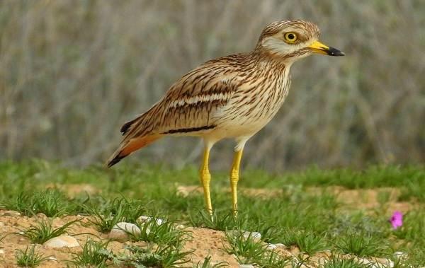 Водоплавающие-птицы-Описание-названия-и-особенности-водоплавающих-птиц-138