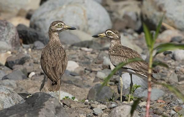 Водоплавающие-птицы-Описание-названия-и-особенности-водоплавающих-птиц-139