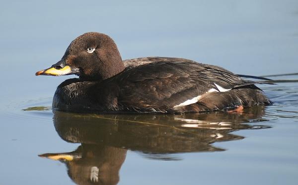 Водоплавающие-птицы-Описание-названия-и-особенности-водоплавающих-птиц-151