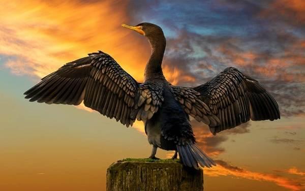 Водоплавающие-птицы-Описание-названия-и-особенности-водоплавающих-птиц-41