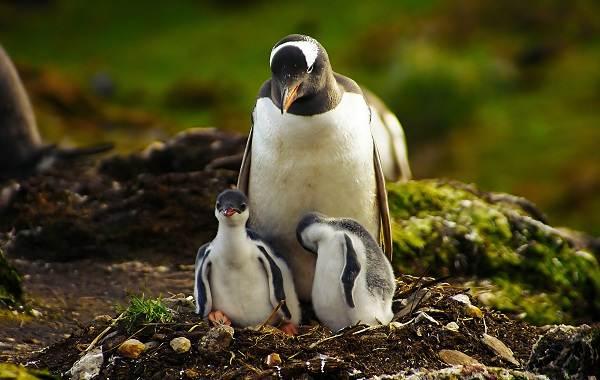 Водоплавающие-птицы-Описание-названия-и-особенности-водоплавающих-птиц-48