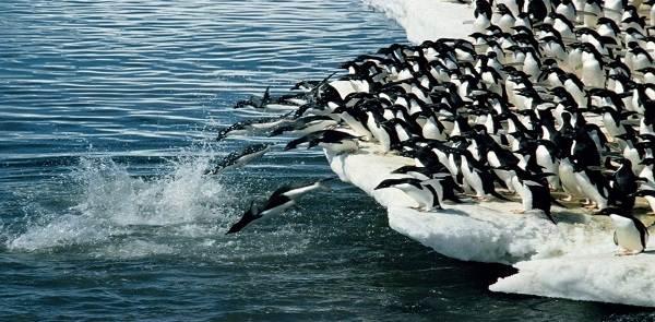 Водоплавающие-птицы-Описание-названия-и-особенности-водоплавающих-птиц-50