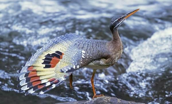 Водоплавающие-птицы-Описание-названия-и-особенности-водоплавающих-птиц-53