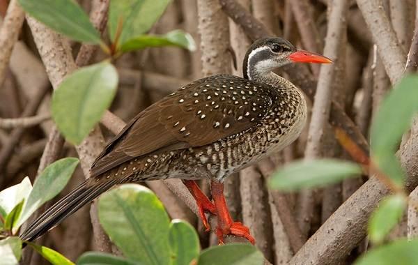 Водоплавающие-птицы-Описание-названия-и-особенности-водоплавающих-птиц-59