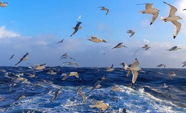 Водоплавающие-птицы-Описание-названия-и-особенности-водоплавающих-птиц-62