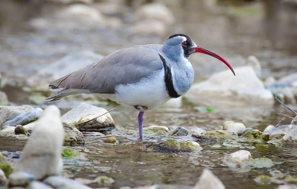 Водоплавающие-птицы-Описание-названия-и-особенности-водоплавающих-птиц-67