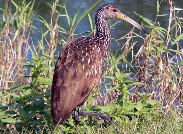Водоплавающие-птицы-Описание-названия-и-особенности-водоплавающих-птиц-71