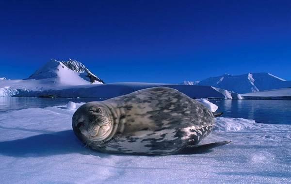 Животные-Антарктики-Описание-названия-и-особенности-животных-Антарктики-10