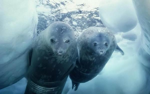 Животные-Антарктики-Описание-названия-и-особенности-животных-Антарктики-11