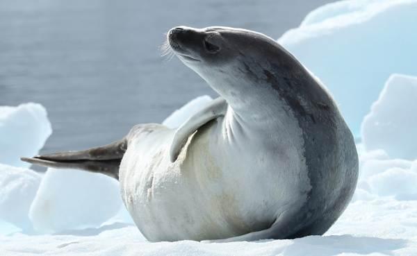 Животные-Антарктики-Описание-названия-и-особенности-животных-Антарктики-13