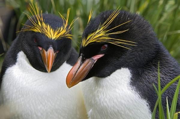 Животные-Антарктики-Описание-названия-и-особенности-животных-Антарктики-14