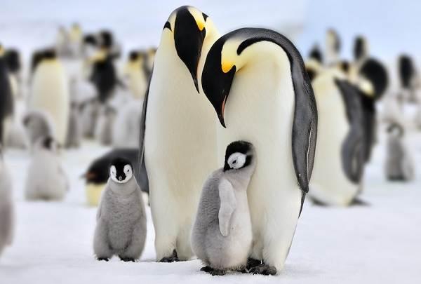 Животные-Антарктики-Описание-названия-и-особенности-животных-Антарктики-15