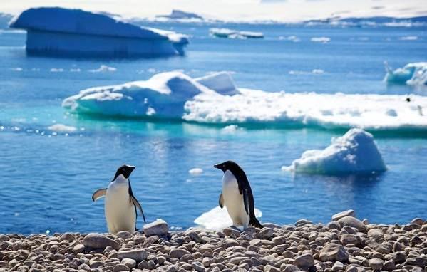 Животные-Антарктики-Описание-названия-и-особенности-животных-Антарктики-17