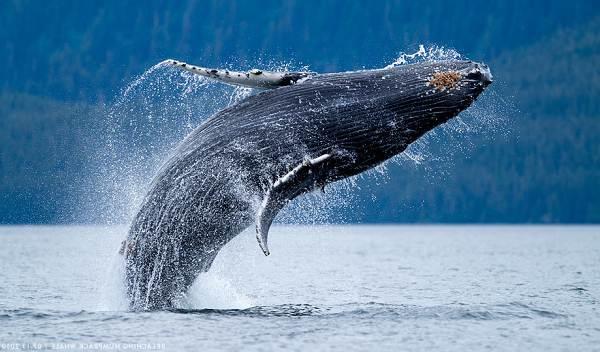 Животные-Антарктики-Описание-названия-и-особенности-животных-Антарктики-19