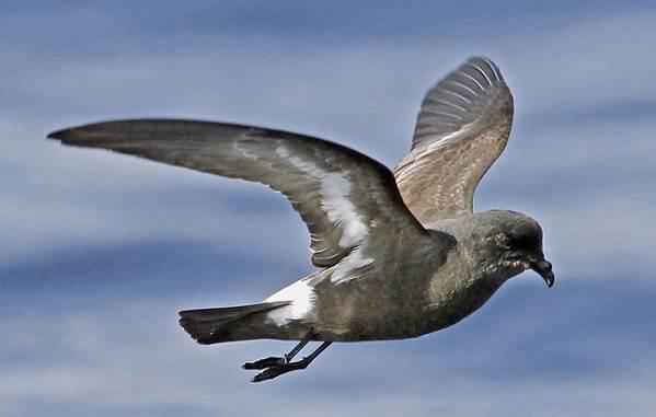 Животные-Антарктики-Описание-названия-и-особенности-животных-Антарктики-25