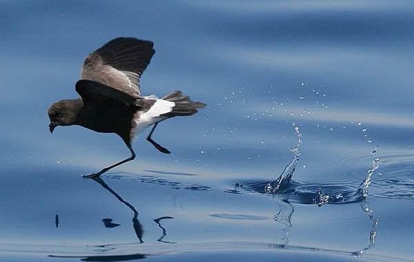 Животные-Антарктики-Описание-названия-и-особенности-животных-Антарктики-26