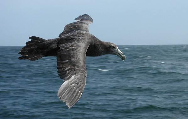 Животные-Антарктики-Описание-названия-и-особенности-животных-Антарктики-28
