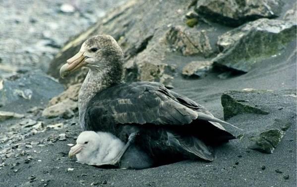 Животные-Антарктики-Описание-названия-и-особенности-животных-Антарктики-29