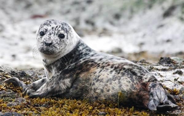 Животные-Антарктики-Описание-названия-и-особенности-животных-Антарктики-3