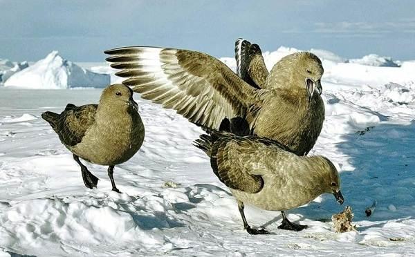Животные-Антарктики-Описание-названия-и-особенности-животных-Антарктики-30