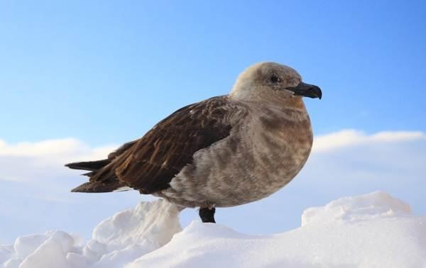 Животные-Антарктики-Описание-названия-и-особенности-животных-Антарктики-31