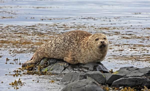 Животные-Антарктики-Описание-названия-и-особенности-животных-Антарктики-4