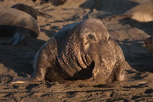 Животные-Антарктики-Описание-названия-и-особенности-животных-Антарктики-7