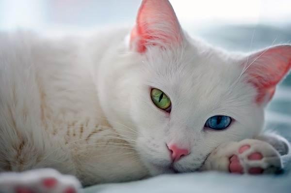 Красивые-породы-кошек-с-названиями-30-фото-1
