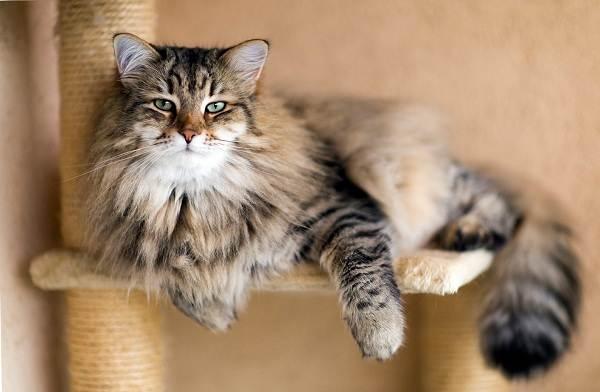 Красивые-породы-кошек-с-названиями-30-фото-10