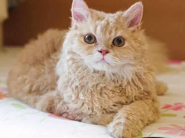 Красивые-породы-кошек-с-названиями-30-фото-11