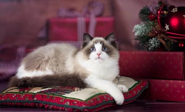 Красивые-породы-кошек-с-названиями-30-фото-13