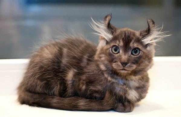 Красивые-породы-кошек-с-названиями-30-фото-16