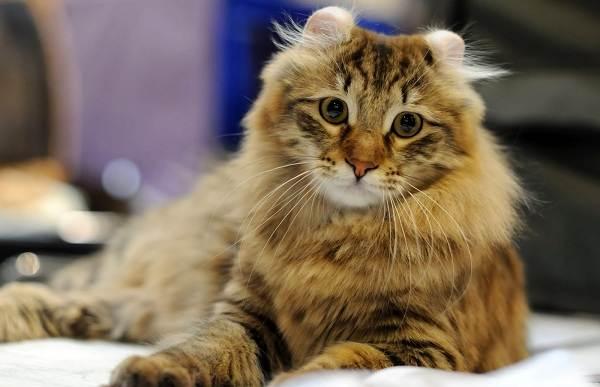 Красивые-породы-кошек-с-названиями-30-фото-17