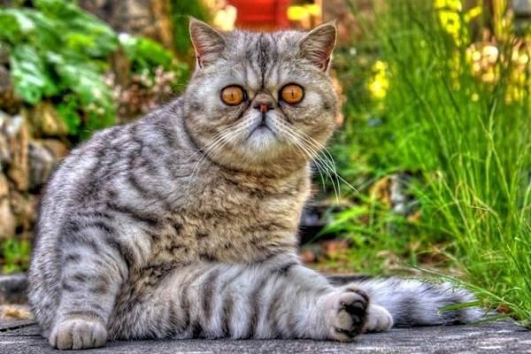 Красивые-породы-кошек-с-названиями-30-фото-2