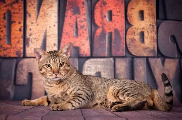 Красивые-породы-кошек-с-названиями-30-фото-20