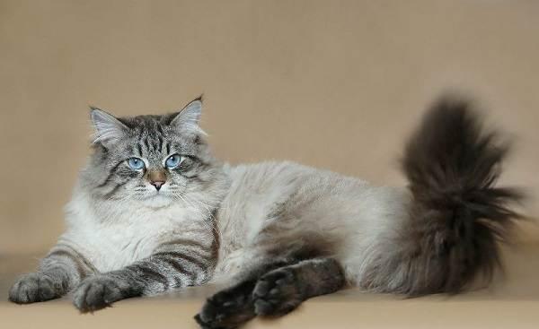 Красивые-породы-кошек-с-названиями-30-фото-26