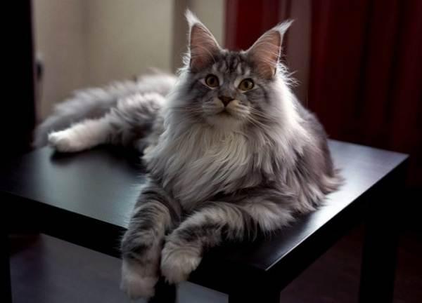 Красивые-породы-кошек-с-названиями-30-фото-29