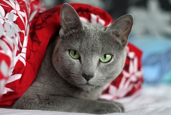 Красивые-породы-кошек-с-названиями-30-фото-3