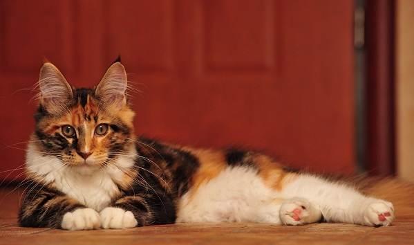 Красивые-породы-кошек-с-названиями-30-фото-30