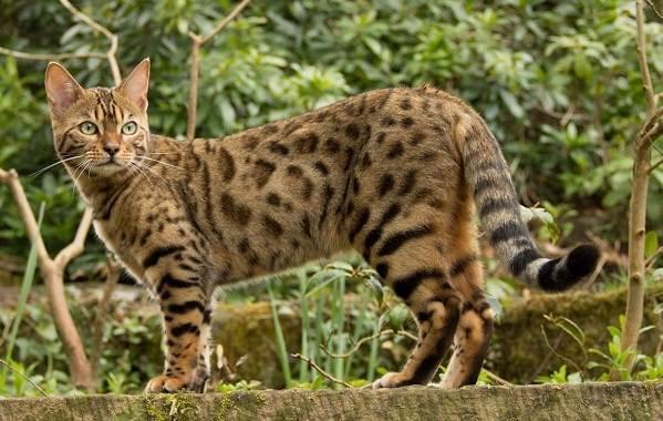 Красивые-породы-кошек-с-названиями-30-фото-33