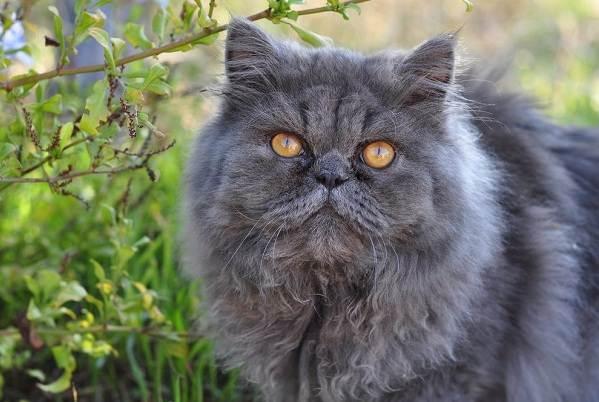 Красивые-породы-кошек-с-названиями-30-фото-5