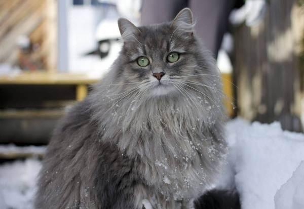Красивые-породы-кошек-с-названиями-30-фото-9