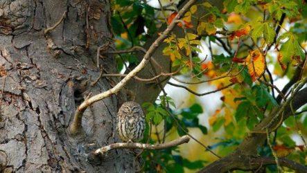 Птицы Сибири. Описания, названия и особенности птиц Сибири