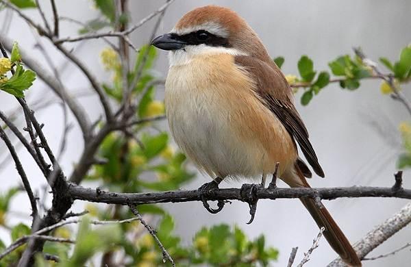 Птицы-Сибири-Описания-названия-и-особенности-птиц-Сибири-106