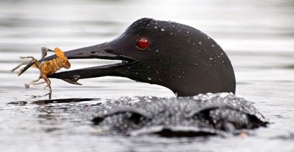 Птицы-Сибири-Описания-названия-и-особенности-птиц-Сибири-112