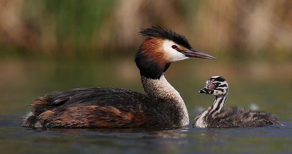 Птицы-Сибири-Описания-названия-и-особенности-птиц-Сибири-19
