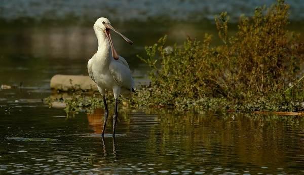Птицы-Сибири-Описания-названия-и-особенности-птиц-Сибири-39