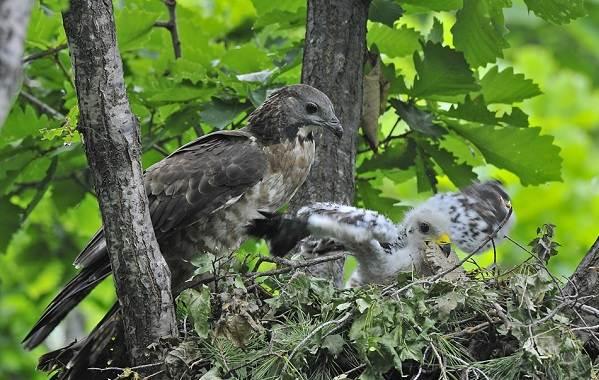 Птицы-Сибири-Описания-названия-и-особенности-птиц-Сибири-55